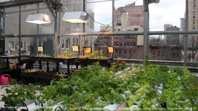 Ein Gewächshaus über den Dächern von Manhattan. Darin ist ein hydroponisches Pflanzungssystem aufgebaut, in dem Gemüse gezüchtet wird. (Foto: Volkmar Kreuter, Fraunhofer UMSICHT)