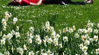 Wetter Frühling und Narzissen