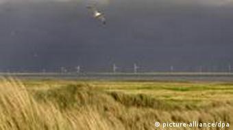 Coastal landscape on Juist Island in the North Sea