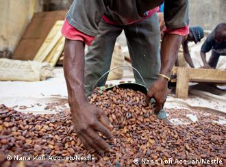 A person in Ivory Coast speads cocoa beans
