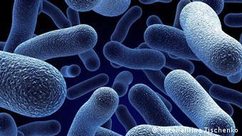 Bakterien Zellen Virus