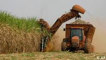 Ernte Zuckerrohr in Brasilien