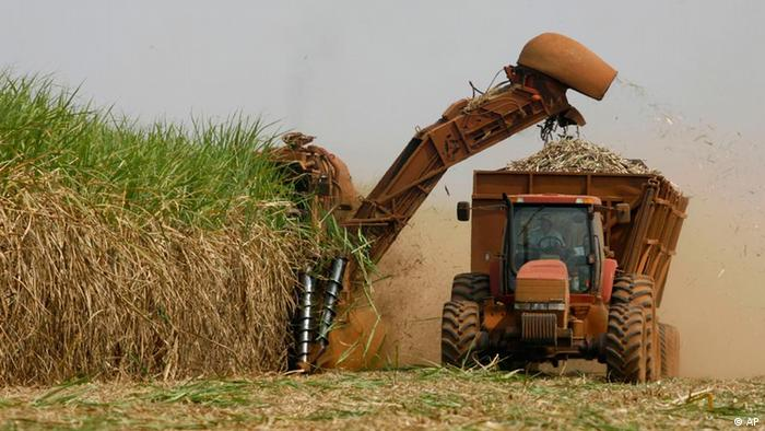 A machine cuts sugar cane on a plantation in Batatais, Brazil