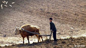A North Korean farmer works with an ox plow in a field near Mount Myohyang, northeast of Pyongyang.