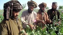 Landwirt bei der Mohnernte in Afghanistan