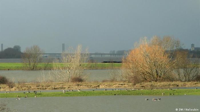 Заповедник Бислихер Инзель (Bislicher Insel), Нижний Рейн. Фото: DW / Максим Нелюбин