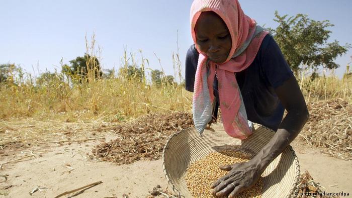 A Sudanese farmer sorts sorgum grain in her field