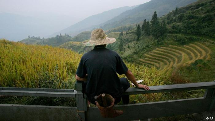 A farmer looks out at rice paddies carved out of the hillside in the village of Longji, in southern Chinas Guangxi region, Friday, Oct. 13, 2006. (ddp images/AP Photo/Elizabeth Dalziel)