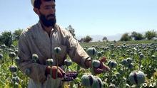 Land und Leute in der Provinz Helmand, Afghanistan