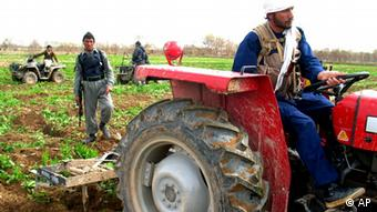 Afghan police officers use tractors to destroy poppy crops on a farm in the village of Dobundi of Afghanistan's Helmand province (Photo: ddp images/AP Photo/Noor Khan)