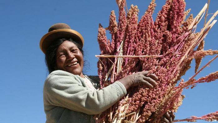 Peru Fairer Handel Produktion von Quinoa