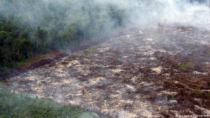 Illegal logging and forest fires in the Indonesian province of Riau.