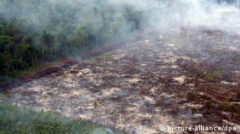slash-and-burn land clearance in Riau province on Sumatra