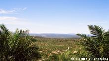 WWF Immer mehr Firmen stellen auf nachhaltiges Palmöl um