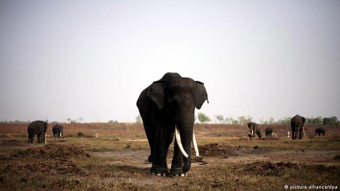 Sumatraelefanten (picture alliance/dpa)