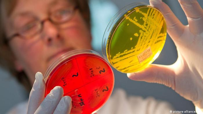 A lab technician looking at a sample of the EHEC bacteria +++(c) dpa - Bildfunk+++