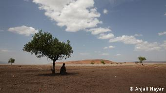 Woman sitting under an acacia tree during her trip to cut firewood outside of Loruth, Turkana