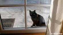 Schwarze Katze sitzt am Fenster, Freitag, der 13.