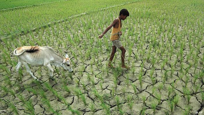 Indien Dürre Trockenheit Junge Kuh Bauer