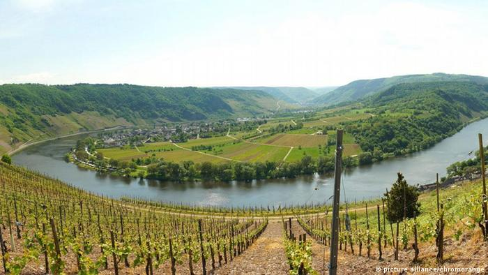 Moseltal Mosel Wein Weinberge Panorama (picture alliance/chromorange)