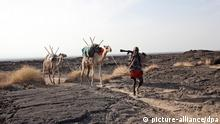 (FILE) A file photograph dated 2011 showing camels with their guide at Danakil desert in northern Ethiopia. Reports state that on 18 January 2012, the Ethiopian government said that two Germans, two Hungarians and an Austrian tourists were killed by gunmen as they visited Erta Ale volcano in the remote region of Afar in northern Ethiopia in early hours of 17 January. Gunmen also kidnapped two Germans and two Ethiopians while injuring a Hungarian and an Italian in an attack took place near the Eritrean border. Ethiopia blamed its neighbor Eritrea for the attack, but Eritrea dismissed the allegation. In 2007, five Europeans and 13 Ethiopians were kidnapped in Afar region that is prone to banditry and separatist rebel fighters' movement. EPA/JOSEF FRIEDHUBER