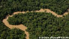 ECU, 2010: Der Fluss Tiguno windet sich durch tropischen Regenwald im Yasuni Nationalpark, Ekuador. [en] Tiguino River meandering in tropical rainforest in Yasuni National Park. Amazon Rain Forest, Ecuador. | ECU, 2010: Tiguino River meandering in tropical rainforest in Yasuni National Park. Amazon Rain Forest, Ecuador.
