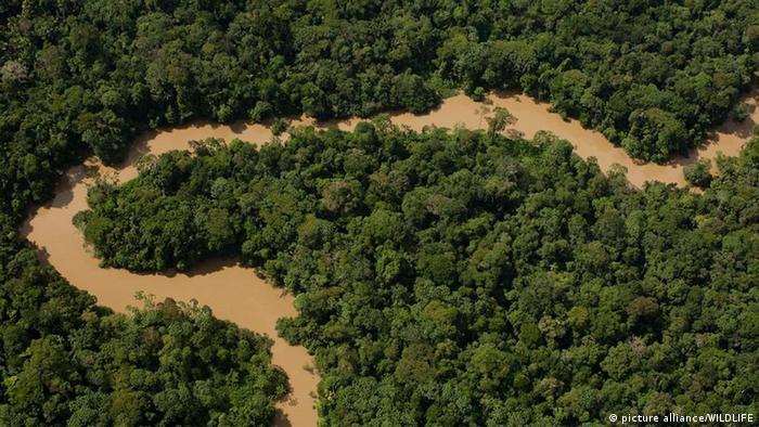 La amazonía ecuatoriana, la región más biodiversa del planeta.