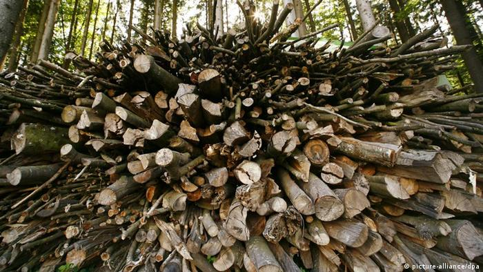 Logs of wood in a pile. Photo: Wolfram Steinberg, dpa