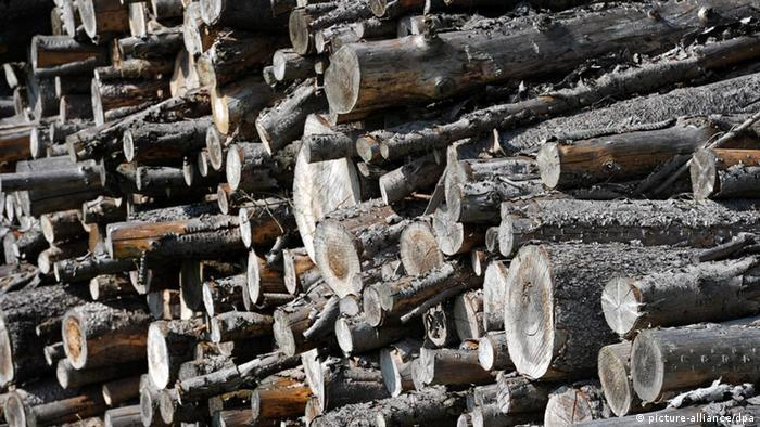 Holz Brennholz Wald Baumstämme Bäume