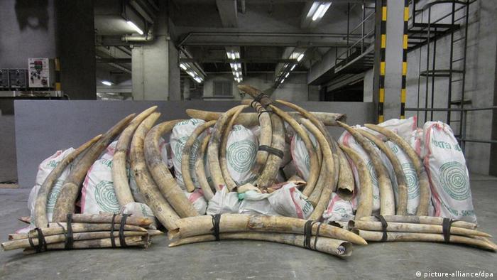 Elfenbein Elefanten Hong Kong Schmuggel