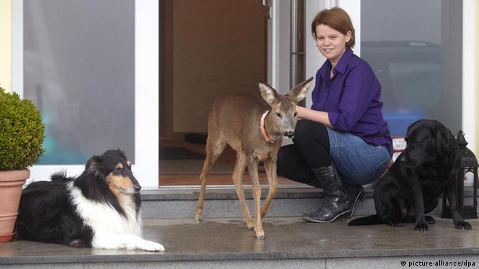Reh Mia lebt in Jägerfamilie in der Eifel
