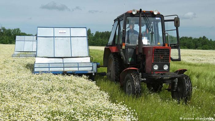 Трактор белорусского производства (фото из архива)