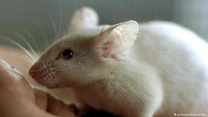 A white mouse crawls on a man's hand