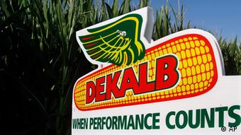 In this July 13, 2010 photograph, the DEKALB corn logo is seen on alongside rows of corn near Pleasant Plains, Ill. DEKALB is one of Monsanto's leading North American brands. Monsanto said Tuesday, Aug. 31, 2010, it expects full year earnings at the low end of its previous expected range. The world's largest seed company is also cutting up to 700 more jobs. (AP Photo/Seth Perlman)