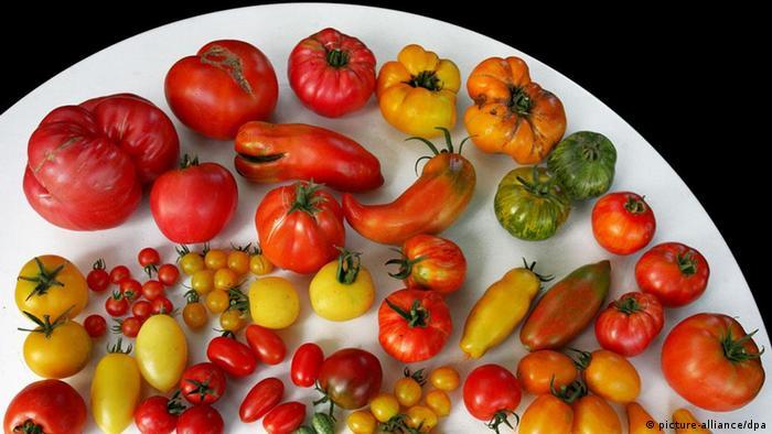 Deutschland Essen Kochen Tomaten