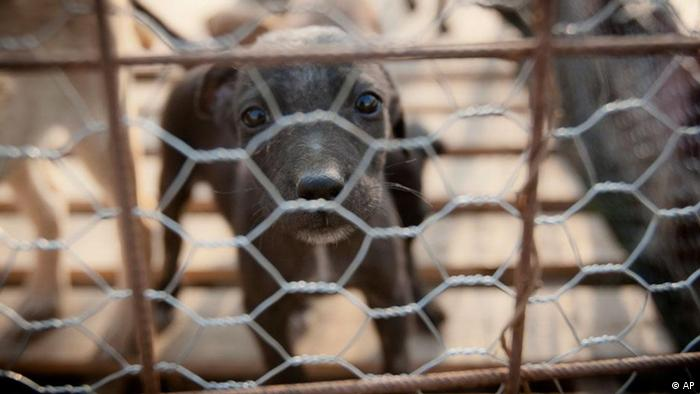 A puppy stares from behind a fence in a stray dog shelter (ddp images/AP Photo/Vadim Ghirda)
