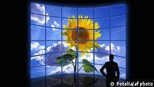 TV Schäden Fernsehen Sonnenblume