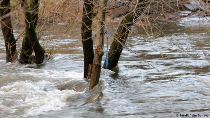 Überschwemmung Hochwasser Wasser Baum Bäume