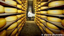 Blick in die Lagerhalle einer Gouda-Käserei in der niederländischen Stadt Gouda, in der die Laibe reifen (Foto vom 14.3.2002). Die Bundesrepublik ist für niederländische Agrarprodukte der bedeutendste Absatzmarkt. Im Jahr 1997 wurden z.B. auf dem deutschen Markt 231000 Tonnen Käse im Wert von 1,8 Milliarden DM verkauft. Mit einem Anteil von 55 Prozent an der Gesamtmenge stand der Gouda an der Spitze des Käseverkaufs.