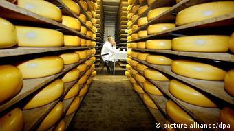 Blick in die Lagerhalle einer Gouda-Käserei in der niederländischen Stadt Gouda, in der die Laibe reifen (Foto: picture-alliance/dpa)