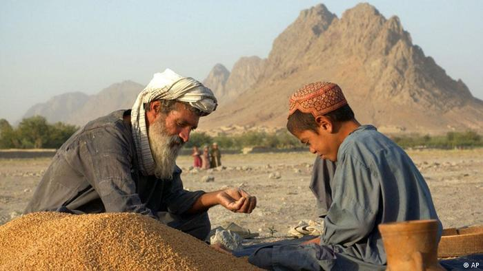 Pir Mohammad, left, and his son Saifullah, 10, clean pebbles out of harvested wheat in Murgham, Afghanistan Sunday, July 28, 2002. Agriculture dependent villagers are hoping for an end to Afghanistan's four year draught. (AP Photo/ Tomas van Houtryve)