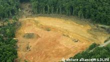 Brasilien Amazonasregenwald Rodung Umweltzerstörung