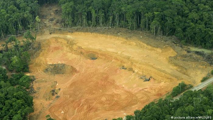 Очищенная от леса территория в Амазонии