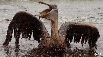 Ein Pelikan mit ölverschmierten Gefieder steckt im Ölschlamm fest nach einer Tankerkatastrophe