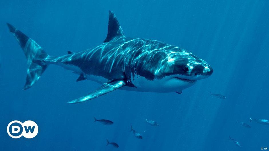 تقليد أسماك القرش لتخفيض نفقات السفن والمحافظة على البيئة علوم وتكنولوجيا آخر الاكتشافات والدراسات من Dw عربية Dw 29 03 2013