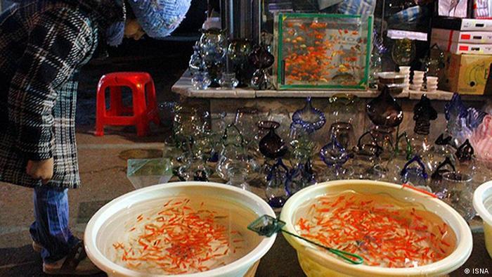 Bildergalerie Iran KW9 /12 Goldfisch