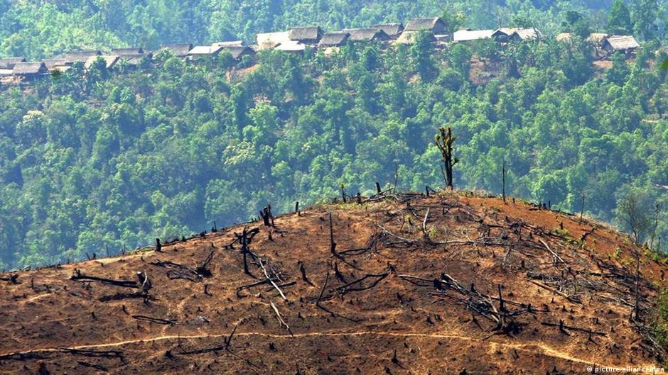 effect of deforestation in extinsion in flora and fauna Deforestation has massive effects on the biosphere it contributes to carbon emissions , changes in water cycles and biodiversity loss  the main cause of deforestation is the conversion of.