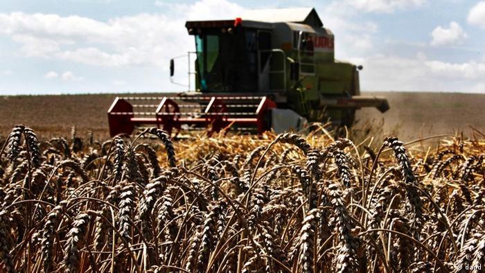 Ein Mähdrescher fährt die Ernte ein (Foto: dapd)