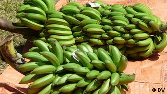 A bunch of Kenyan bananas (Photo: Asumpta Lattus)