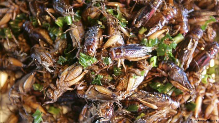 Insektenforscher van huis: u2033am liebsten esse ich heuschrecken